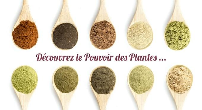 LE POUVOIR DES PLANTES